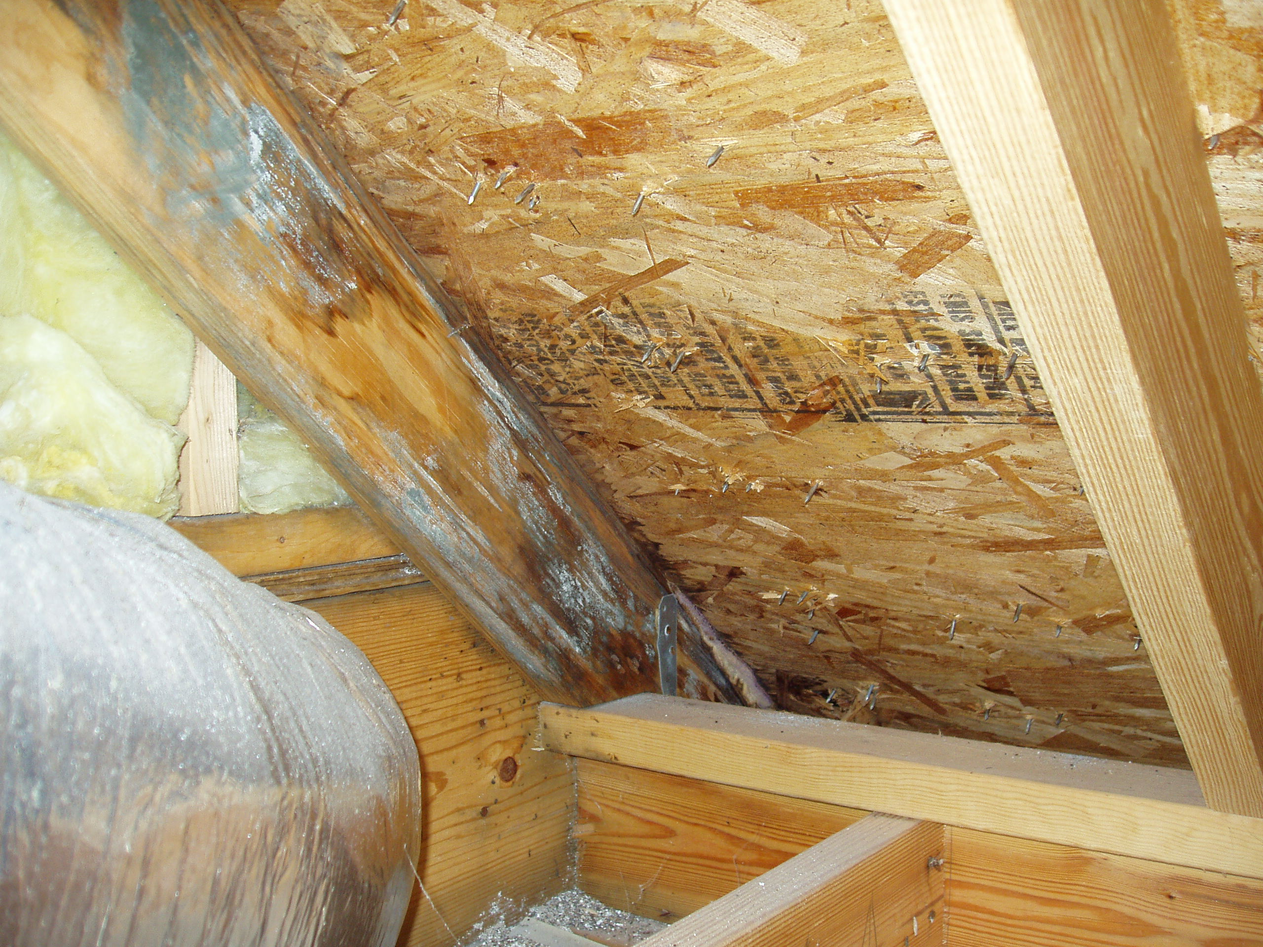 Dealing with attic mold mold removal portland oregon dealing with attic mold solutioingenieria Image collections